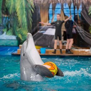 Дельфинарии, океанариумы Дедовска