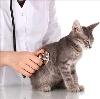 Ветеринарные клиники в Дедовске